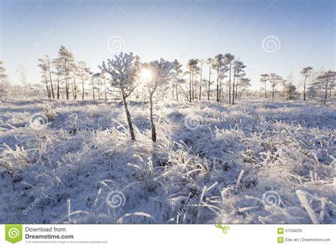 frosty forest royalty free stock frosty morning in the forest royalty free stock