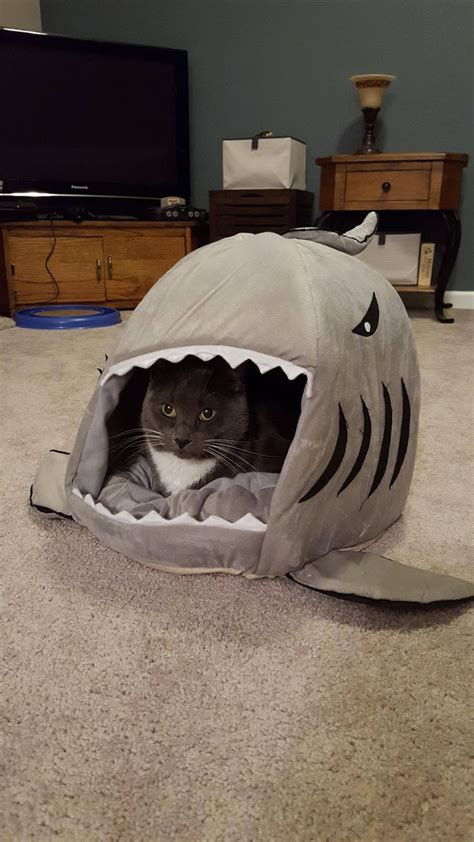 shark bed for cats so we go a shark bed for our cat heathcliff he seems
