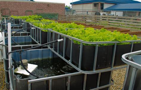 diy aqua farm sanger