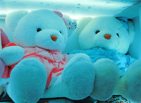 wallpaper of couple teddy bear cute teddy bear pictures hd images free download desktop
