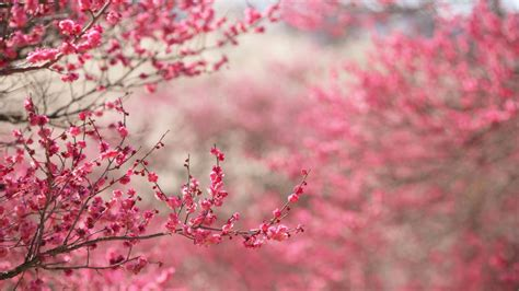 pretty wallpaper for mac 2560x1440 spring in pink desktop pc and mac wallpaper