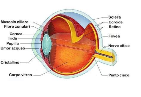occhio interno realt 224 o illusione vediamoci chiaro