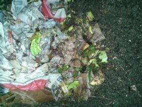 lombrichi nei vasi separazione lombrichi compost