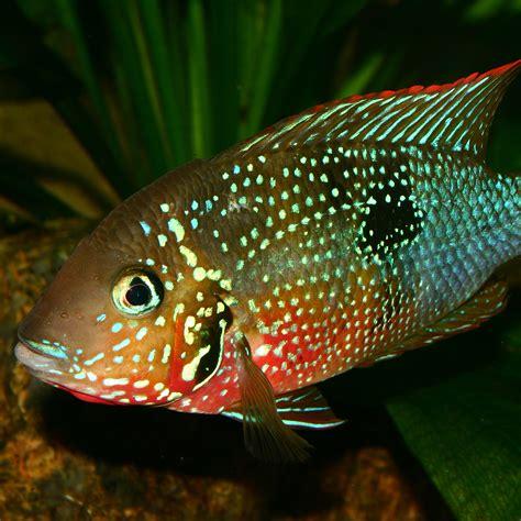 aquascaping supplies – The Green Machine aquascaping shop, aquarium plants