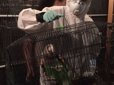 ri parrot rescue scrambling to care for 130 birds after