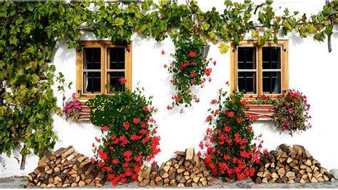 fiori in balcone piante in balcone
