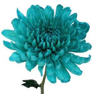 teal colored flowers turquoise wedding cremon flower