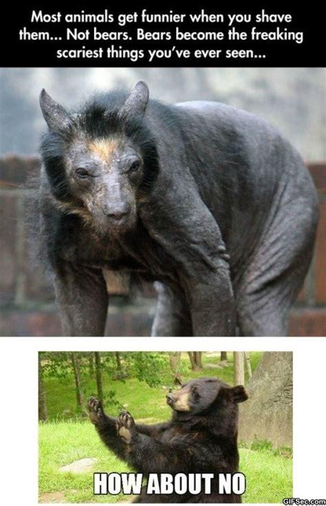 hairless bear memes