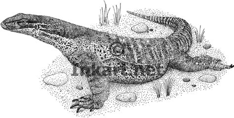 water monitor coloring page how to draw water monitor
