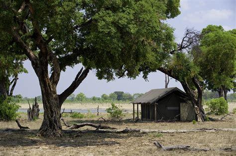 david kalama s photographic safari in east africa kenya and tanzania volume 1 books davison s c hwange best safari