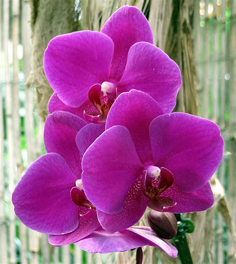 gambar menanam daun bunga botani flora ungu