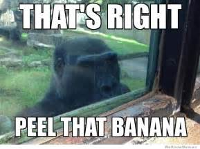 Funny Gorilla Memes - post your favorite meme thread page 789 tmb