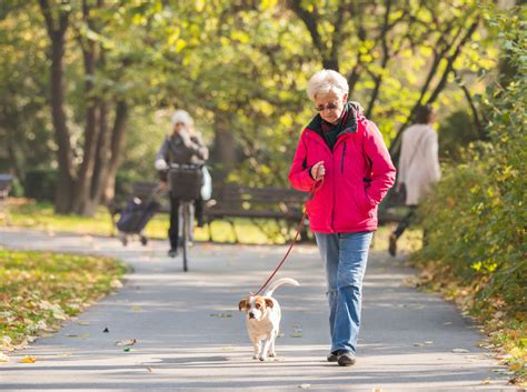 when can puppies walk among the aging walkers can reap health benefits toronto