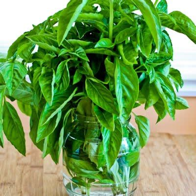 how to preserve fresh basil on the countertop kalyn s kitchen
