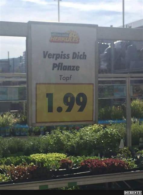pflanze verpiss dich 4932 pflanze verpiss dich bunte 39 verpiss dich 39 pflanze