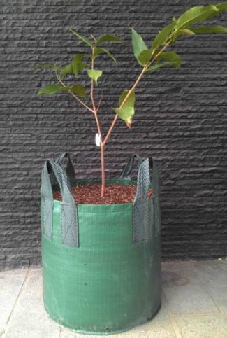 Planterbag 35 Liter Hijau planter bag hijau 100 liter jual tanaman hias