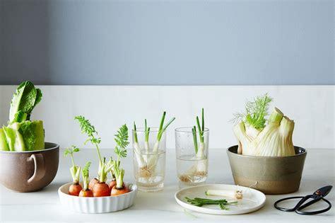 4 vegetables that grow in one week how to regrow roots in one week