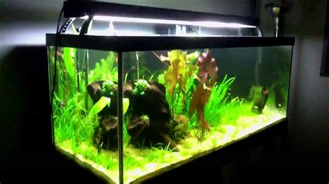 75 Gallon Planted Aquarium Week 10   YouTube