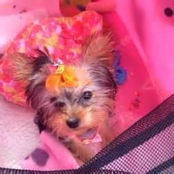 puppy boutique ny puppy boutique pet stores bensonhurst ny yelp