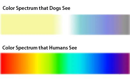 can see color are dogs color blind the answer is not so black and