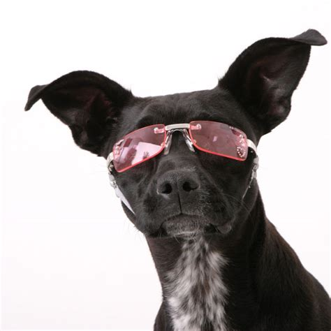 sunglasses for dogs doggles pink sunglasses by k9 optix designer boutique at glamourmutt