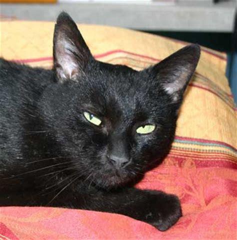 Kater Milchtritt Decke by Tiervermittlung Katzen Babykatzen Katzenbabys Katze