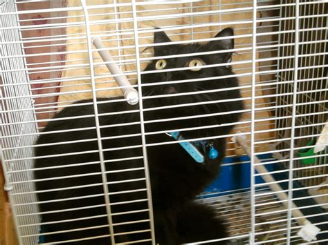 gabbia gatto il gatto in gabbia petpassion