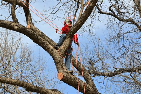 tree timer winter is an opportune time for pruning trees