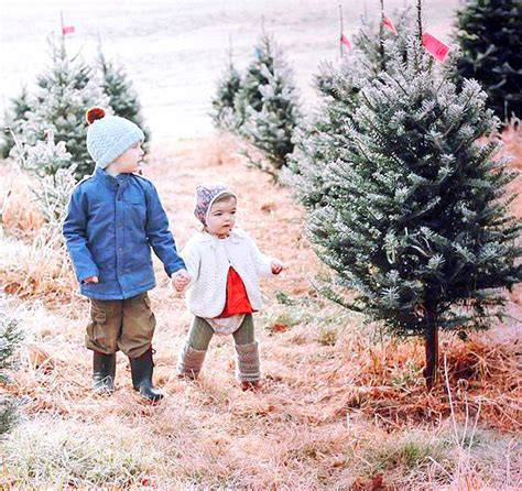 cranston s christmas tree farm ashfield ma
