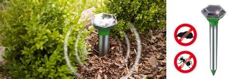 Maulwurf Bek Mpfen Hausmittel 2144 by Hilfe Gegen Ameisen Im Garten Mittel Gegen Ameisen Envira