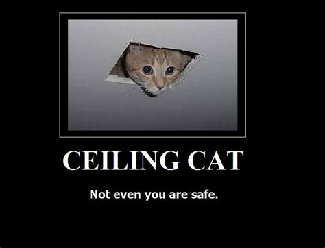 Ceiling Cat Meme - image 16656 ceiling cat know your meme