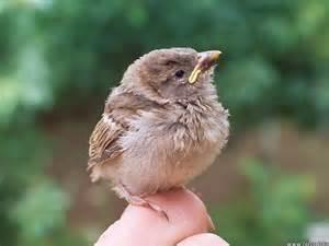 captain s log found a baby bird what do i do bird