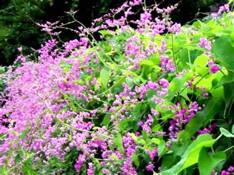 Tanaman Bunga Dahlia Ungu Tinggi 30 50 Cm 30 jenis tanaman hias untuk taman dinding vertikal beserta gambarnya
