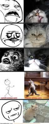 Cat Meme Faces - cats doing rage faces meme collection