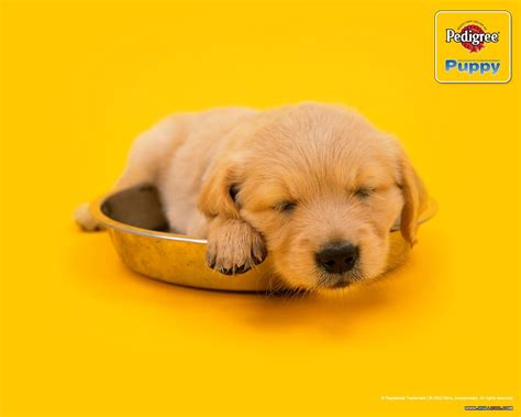 pedigree for puppies the success of pedigree petfoods s planet