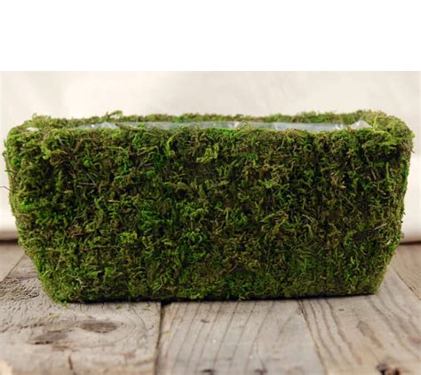 Moss Planters by Moss Planter 11in