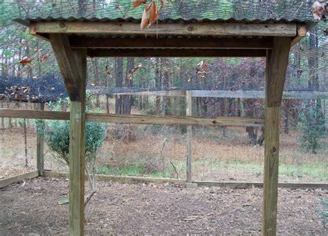 peafowl haven cubit   raising peafowl forum