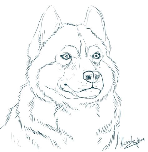 coloring pages of husky dogs alaskan husky coloring pages