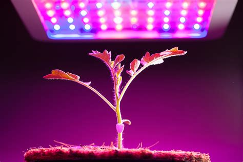 grow lights  indoor plants  indoor gardening