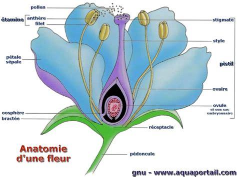 fleur d 233 finition photos anatomie