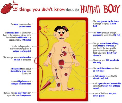 15 things about the human body online nursing programs schools