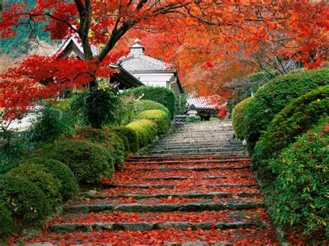 beauty garden let s learn japanese 日本語を勉強しましょう japanese gardens nature