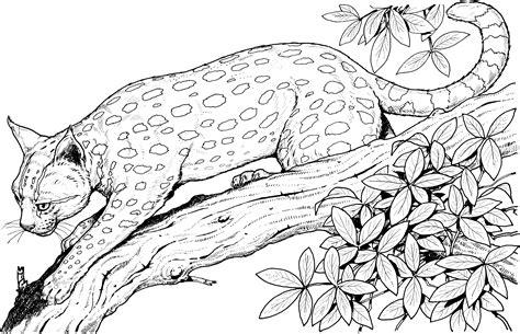 african cats coloring pages desenhos para colorir adultos 40 imagens