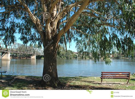 bench under tree park bench under a tree stock photography image 574782
