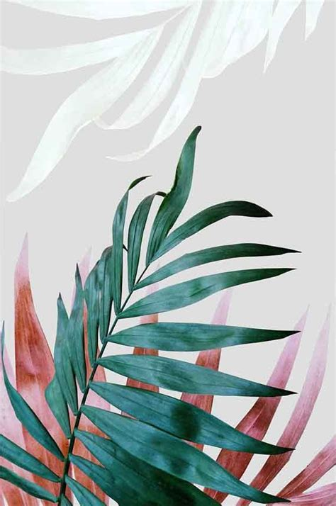 aesthetic plant wallpaper 25 best ideas about tropical leaves on pinterest
