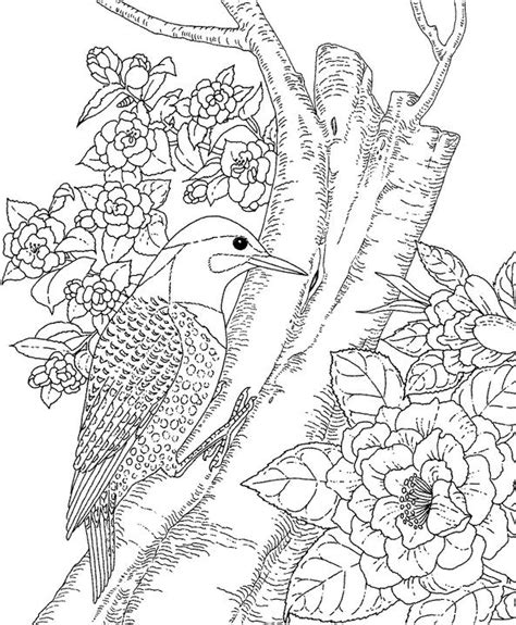 yellowhammer coloring page alabama yellowhammer coloring page purple kitty