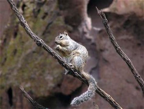 gabbia di scoiattolo come progettare una gabbia di scoiattolo russelmobley