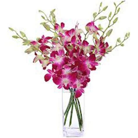 Vase Of Orchids by Image Gallery Orchid Flower Vase