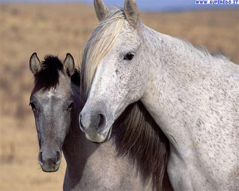 imagenes de feliz cumpleaños con caballos sfondi cavalli 69 sfondi in alta definizione hd