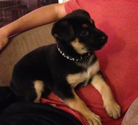 a mix of new and vintage silvina s kitchen in argentina baby molly german shepherd mix puppy 6 weeks old